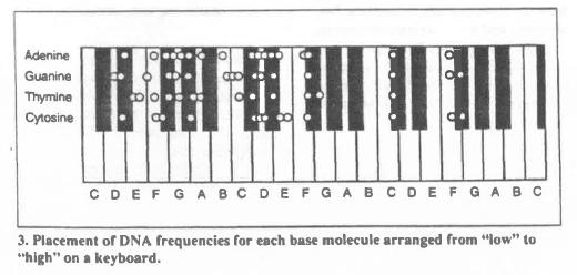 Las bases del Adn traducidas en notas musicales según Susan Alexjander y David Deamer